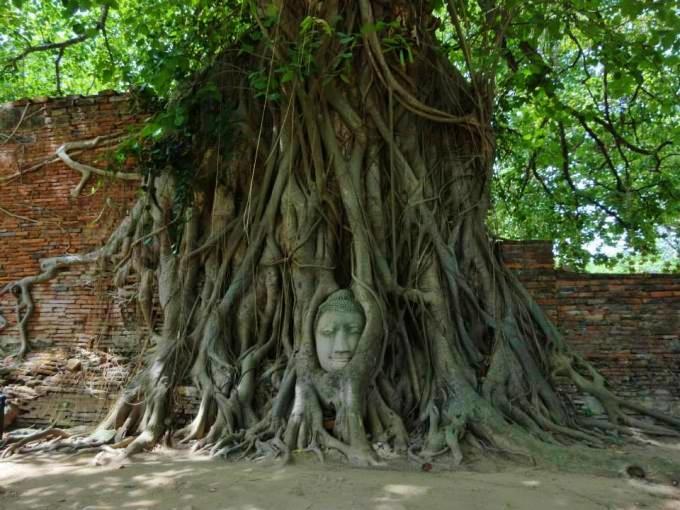 Thailande tête de bouddha Ayutthaya