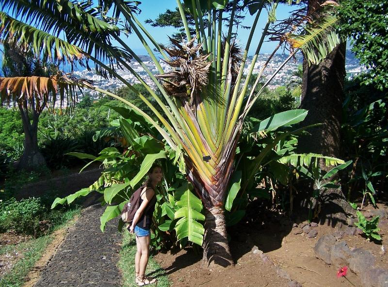 Madère jardin botanique de Funchal