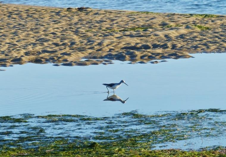 Algarve Olhao Oiseau
