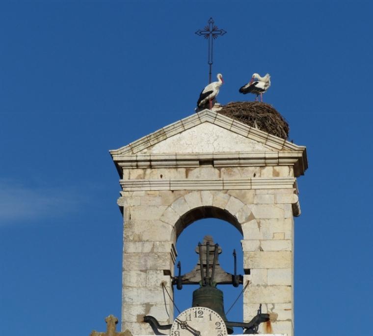 Algarve Cigogne sur les toits