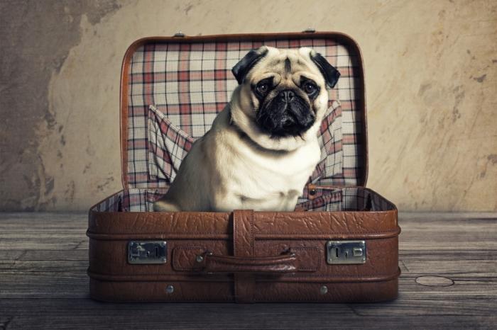 voyager-voiture-chien
