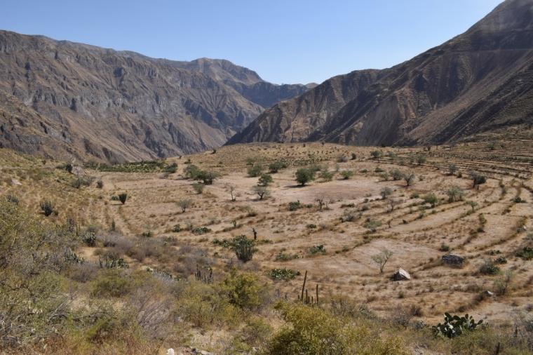 paysage canyon de colca perou
